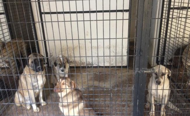 Sivrihisar'a bırakılan köpeklere Odunpazarı sahip çıktı