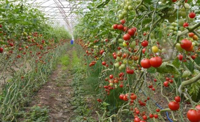 """""""Antalya'daki tarım ihracatı fiilen durduruldu"""" iddiası"""