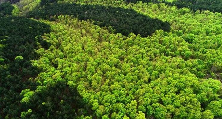 Tropikal alanlar yok edildi!