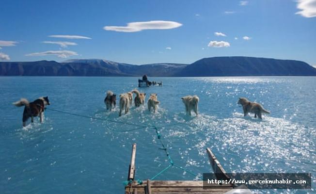 Grönland'da buzullar eriyor...