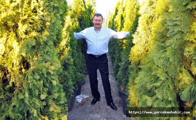 Gökçek'in 26 bin 500 TL'lik ağaçları ibret-i alem için Kızılay'a dikildi!