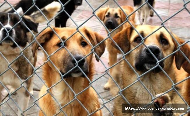AKP, Hayvan Hakları Yasası için komisyonu bekliyor