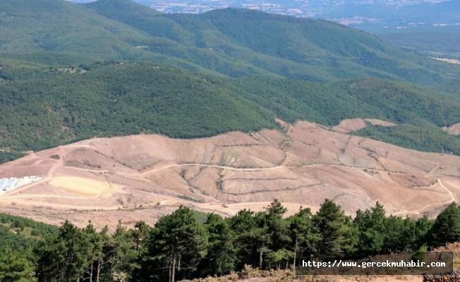 Binlerce ağacın kesildiği Kaz Dağları'nda kamu yararı araştırması yapılmamış