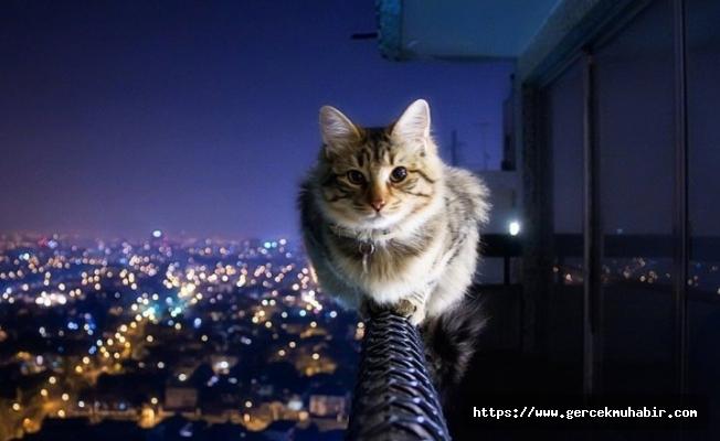 Kedilerin ana vatanı Türkiye çıktı