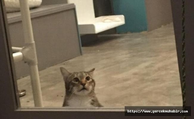 Barınaktaki diğer kedilerin kapılarını açıp serbest bırakan 'asi kedi Quilty' tecrite alındı