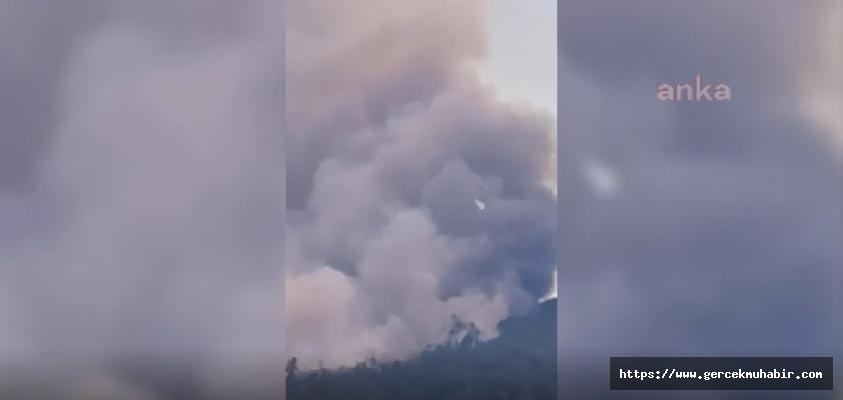 Aydın Çine'de Orman Yangını