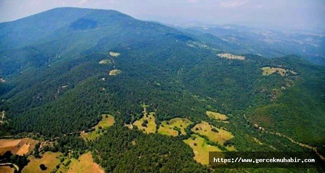 Kaz Dağları'nda 3 Buçuk Milyon Ağaç Kesilecek