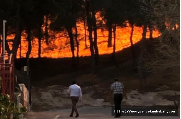 CHP'li Şahin: Hatay'daki Yangın Sabotaj Olabilir