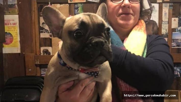 ABD'de bir kasabanın belediye başkanı Wilbur Beast isimli Fransız bulldog oldu