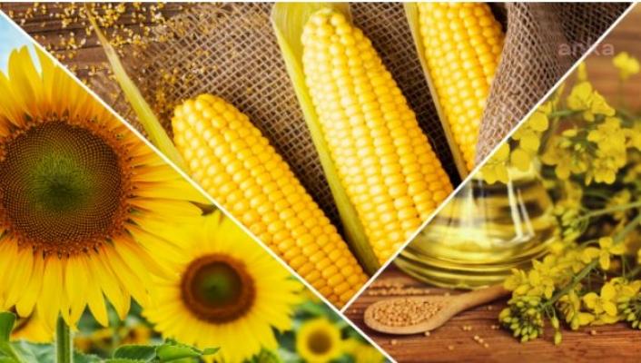 Tarakçıoğlu: Özel Program İle Çiftçilerin Verimi Yüzde 26 Arttı