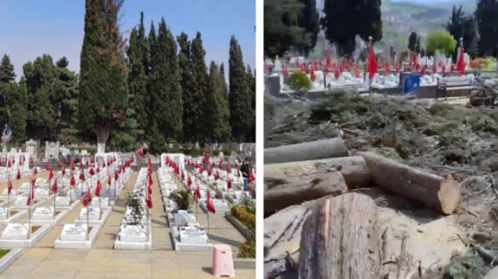 AKP'li Trabzon Büyükşehir Belediyesi, mezar taşlarını kirlettiği için onlarca selvi ağacını kesti