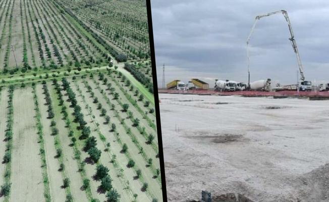 AKP'li belediye 85 bin ağaç söktü, alanın bir kısmı sanayi sitesine katıldı, geri kalanı satılacak