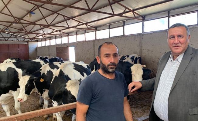"""""""Besici, süt ineklerini gözyaşları ile kesime gönderiyor"""""""