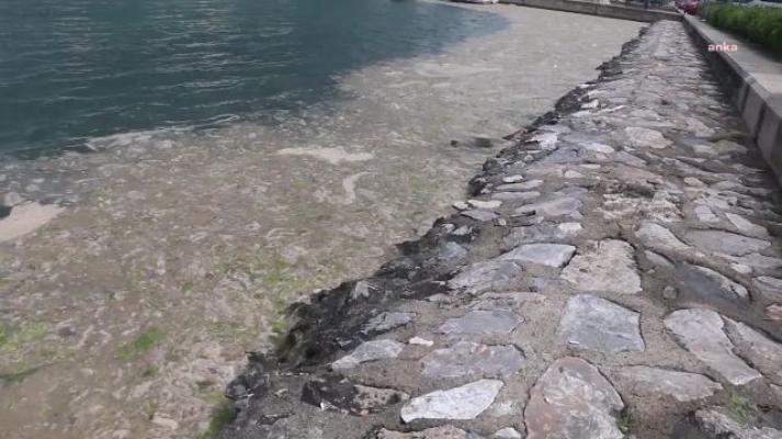 """Hidrobiyolog Levent Artüz: """"Haliç'i nasıl temizlediysek Marmara Denizi'ni de öyle temizleyeceğiz dendi, umarım dil sürçmesidir"""""""