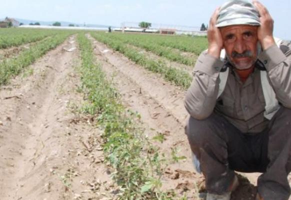 Rus, Kanada, Arjantin, Ukrayna, Brezilya çiftçisi, Anadolu çiftçisinden 3 kat daha fazla destek aldı