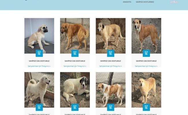 Ankara Büyükşehir'den hayvan dostu yeni uygulama: E-Pati