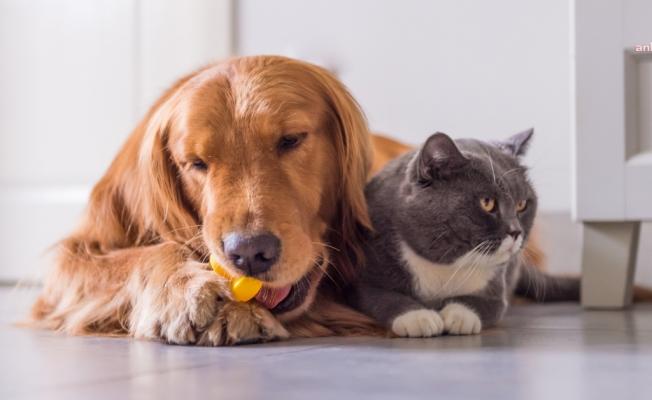 Bayram Öncesi Kedi Köpek Otellerine Yoğun İlgi