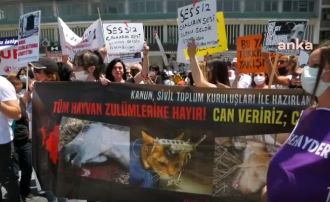 Hayvanseverlerden Cumhurbaşkanı Erdoğan'a veto çağrısı: 'Milyonlarca hayvanseverin oyu söz konusu'