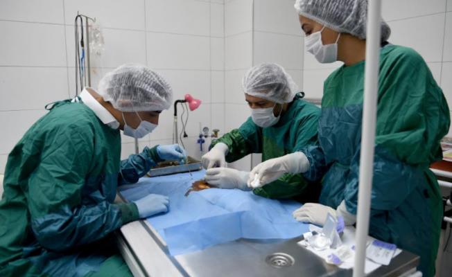 Seyhan'da 2 yılda 3 bin 600 sokak hayvanı kısırlaştırıldı