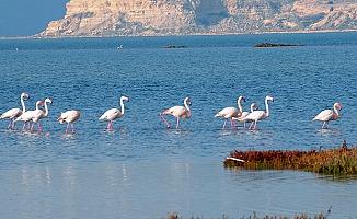 Gediz Deltası UNESCO listesine alınsın