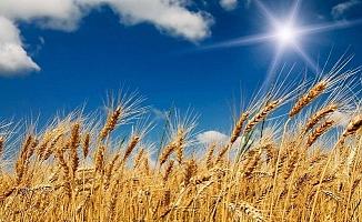 Buğday ithalatında rekor!
