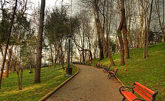 İstanbullular ağaçlarını seçiyor