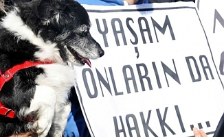 Köpeğe Tecavüz İddiasıyla Yapılan Suç Duyurusu 'Mala Zarar Vermekten' İşleme Konuldu