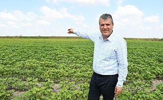 """CHP'li Barut: """"Pamuk, soya ve mısırda destek ödemeleri peşin yapılsın"""""""