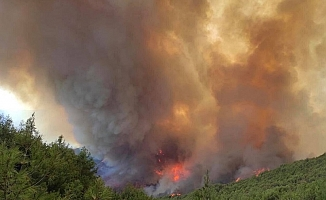 CHP'den Hatay'daki Orman Yangını Raporu
