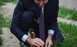 Adalet Bakanı Gül'den Hayvan Hakları Paylaşımı: Geri Sayım Başladı