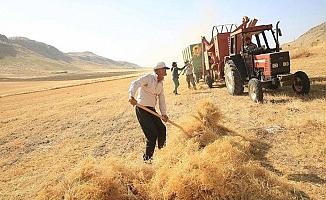 TÜİK, buğdayda rekolte kaybını 1.5 milyon ton açıkladı; ziraat odaları rakamın daha fazla olduğunu iddia etti