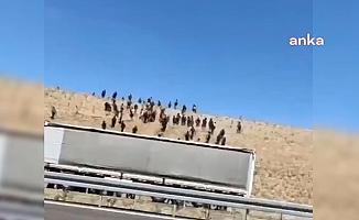 Niğde otoyolunda şaşırtan görüntü: TIR'dan inen onlarca insan araziye doğru yürüdü