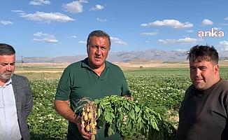 Niğdeli çiftçi: Patates üretimi düştü, tohum almak için büyük şirketlere yalvarmak zorunda kaldık