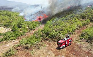 Sayıştay: Orman Genel Müdürlüğü, Orman Yangın Planlarını Tamamlamadı