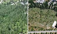 ODTÜ'deki ağaç katliamı böyle görüntülendi