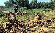 KYK Yurdu için ağaçlar kesildi, öğrenciler tepki gösterdi