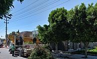 Mersin Belediyesi, elektrik kesintisi yaşanmaması için ağaçları buduyor